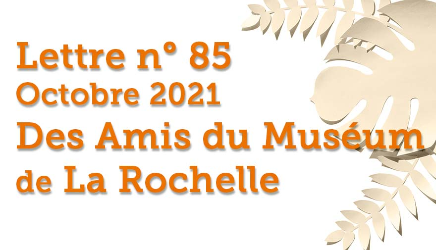 Lettre n° 85 Octobre 2021 Des Amis du Muséum de La Rochelle